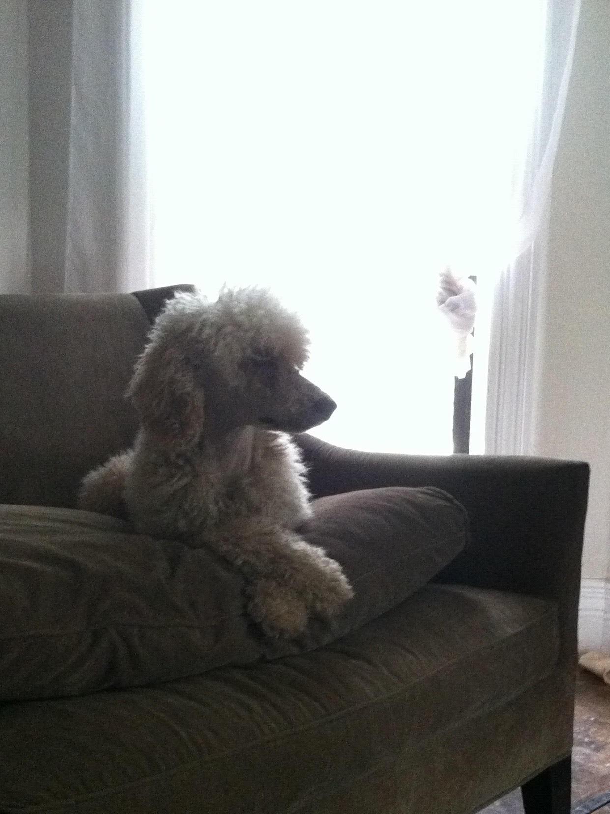 Dog Profile